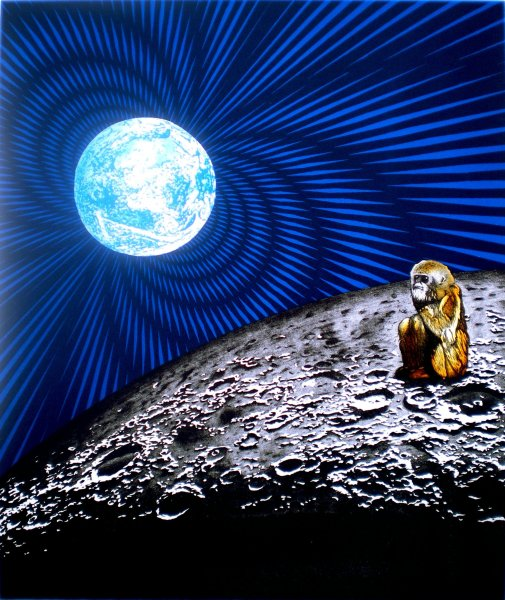 The Monkey Who Made It To The Moon
