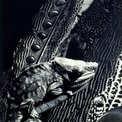 Chameleon (photo-etching)